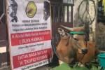 PPMM Kurban Sapi yang Pahalanya untuk Buya Hamka dan Taufik Kiemas