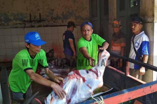 pemotongan hewan kurban di RPH