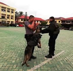 Dalmas Bersama Tim Unit Satwa Anjing K-9