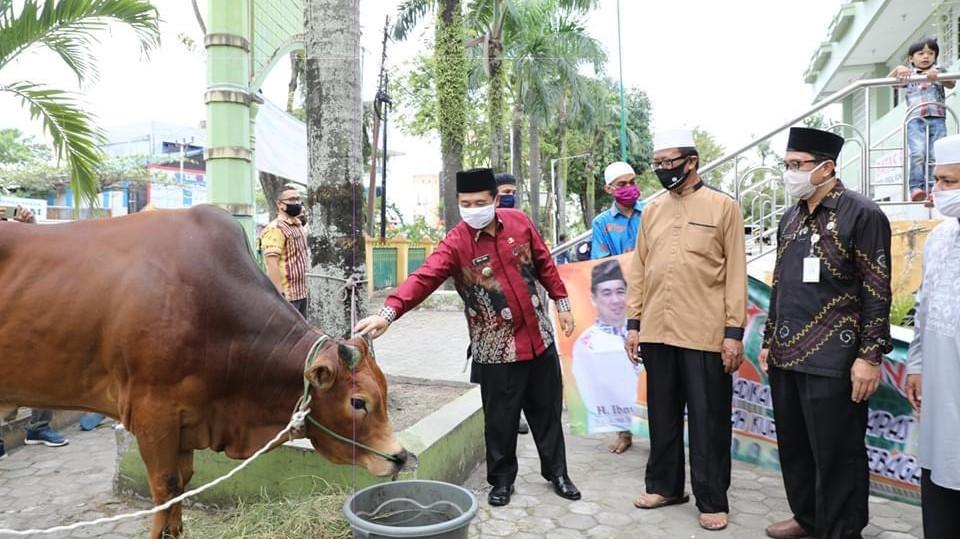 SAPI QURBAN dari Walikota untuk Masjid Agung Miftahul Ihsan