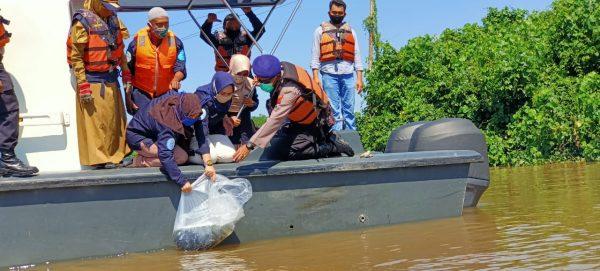 PULAU BROMO Ditebari 10.000 Bibit Ikan Kelabau dan Patin
