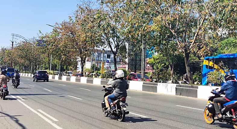 MENGERING Pohon di Jalan A Yani akibat Cuaca Panas dan Kekecilan Media Tanam