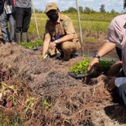PETANI TANAM Cabai Hiyung Sistem Vetigasi Kapiler Didukung Bank Kalsel Cabang Rantau