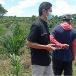 DIMONITORING Disbunnak Kalsel Program Pembukaan Lahan Tanpa Bakar