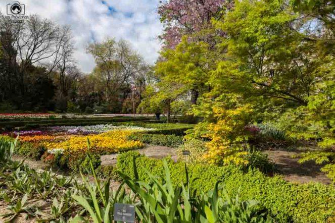 Real Jardim Botânico em Madri Espanha