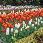 Real Jardim Botânico em pontos turísticos em Madri
