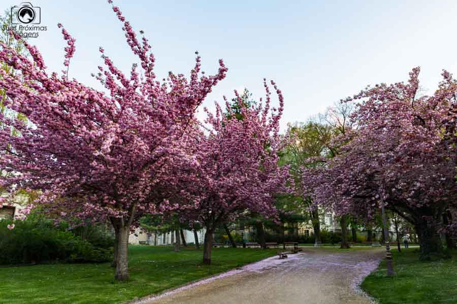 vista das Cerejeiras em Reims
