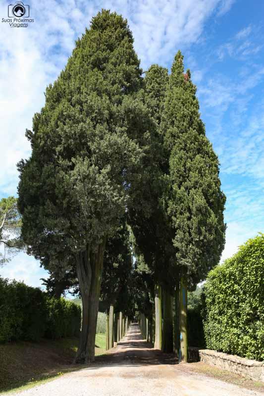 Biondi Santi nas Vinícolas da Toscana I