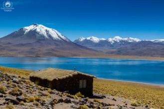 Laguna Miñiques - Altiplânicas nas Fotos do Deserto do Atacama