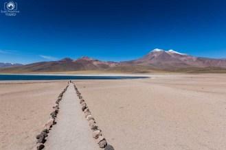 Laguna Miscanti - Altiplânicas