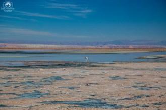 Laguna Chaxa no Roteiro de 5 dias no Deserto do Atacama