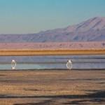 Laguna Chaxa no Roteiro no Atacama