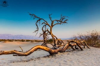 Mesquite Flats no Death Valley EUA