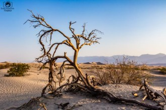 Mesquite Flats no Death Valley California