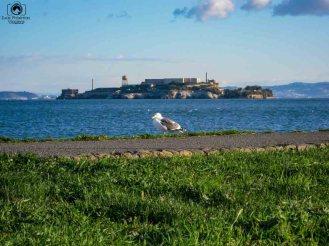 Vista de Alcatraz desde Parque do Presídio nas Melhores Dicas de San Francisco