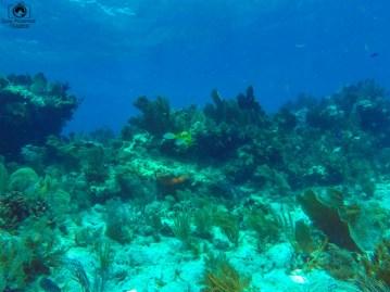 Mergulho em Key Largo nos Florida Keys 3