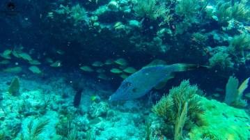 Mergulho em Key Largo