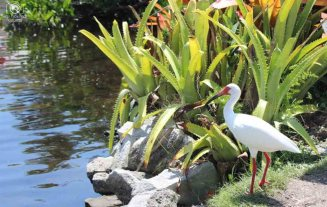 Aves no Zoo de Naples