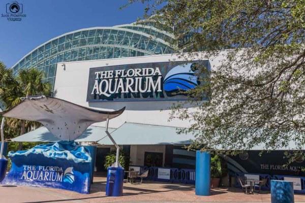 The Florida Aquarium em o que fazer em Tampa
