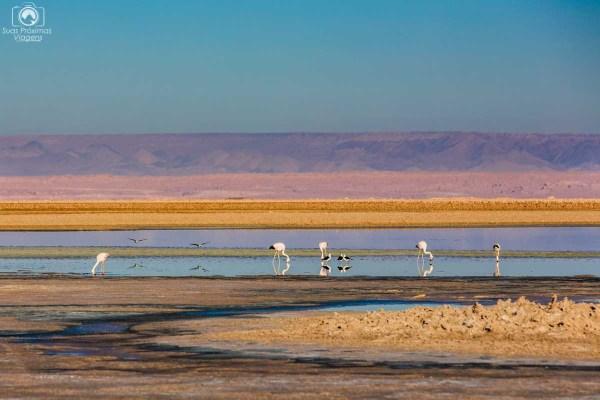 Laguna Chaxa no Deserto do Atacama no Chile