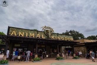 Animal Kingdom em O que fazer em Orlando