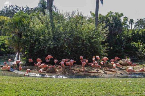 Exposição dos Flamingos no Busch Gardens