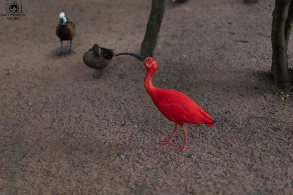 Vista de um pássaro e patos no Parque das Aves em O que fazer em Foz do Iguaçu