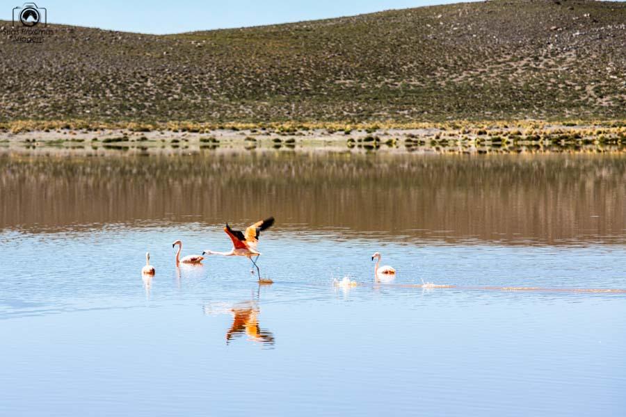 Imagem de Flamingos na Laguna Vinto no sul da Bolívia