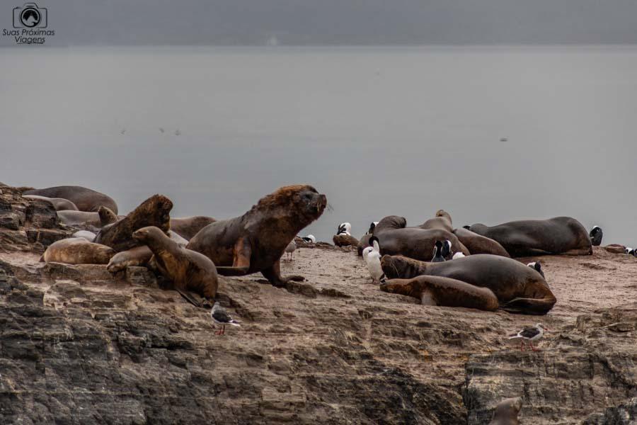 imagem da ilha dos lobos em ushuaia
