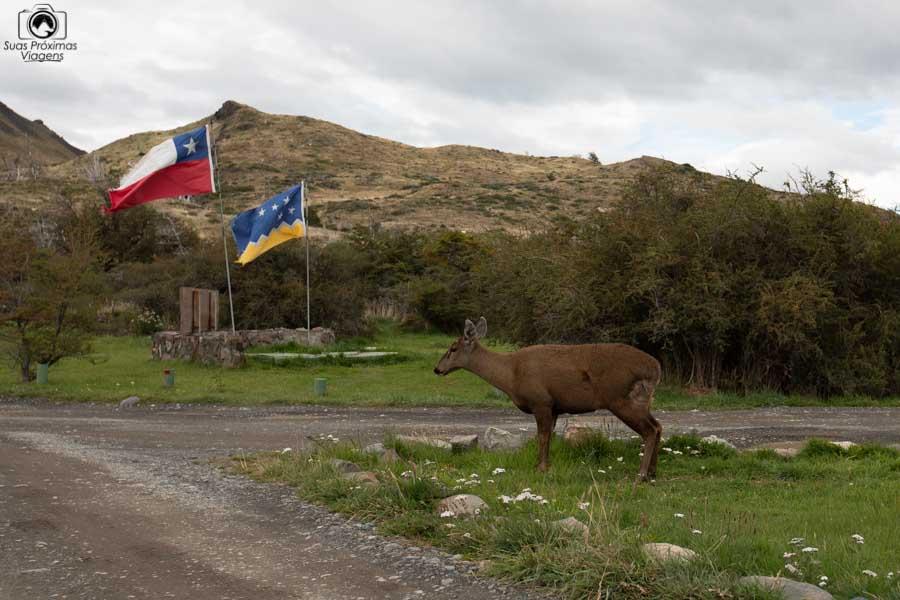Imagem do Huemul no parque nacional Torres del Paine