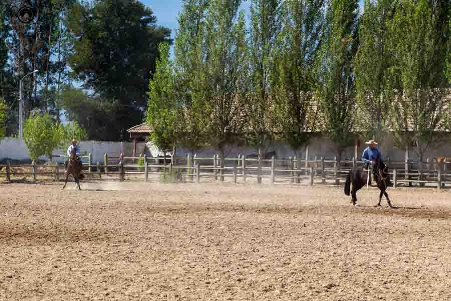 imagem dos peões treinando os cavalos de apresentação da Casa Silva