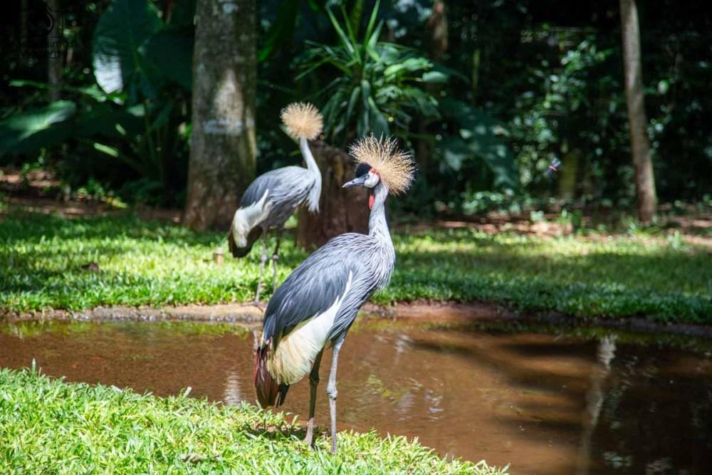Imagem de 2 aves no parque em Foz do Iguaçu
