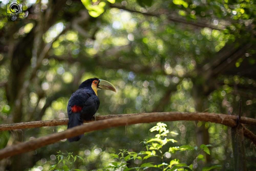 imagem do Tucano no Parque das Aves