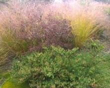 Hyde Hall RHS, Au & NZ garden