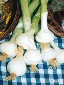 BARLETTA (fresh market)