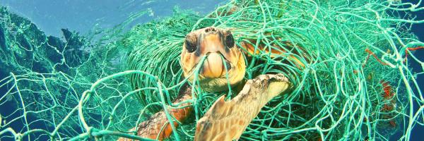rete fantasma imprigiona tartaruga