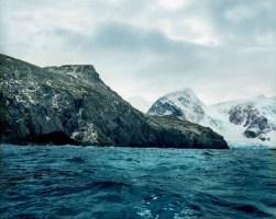 antarcticmoss
