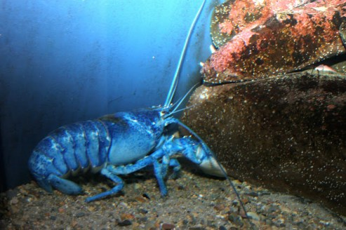 'arthropod', New England Aquarium, 2012