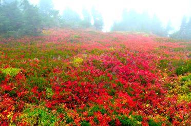 Fall colors under fog