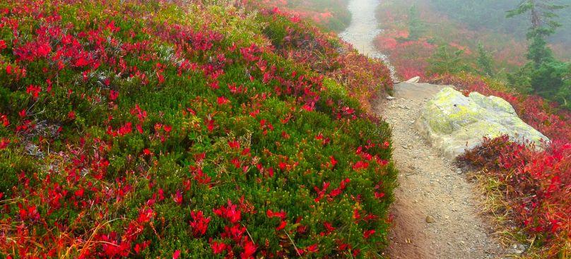 Fall colors along trail