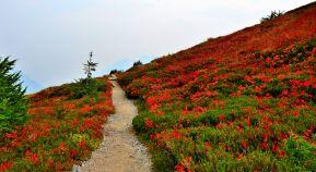 Trail cutting through meadow