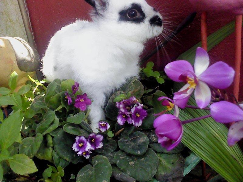 Gallinas y conejos se comen mis plantas alguna solucin