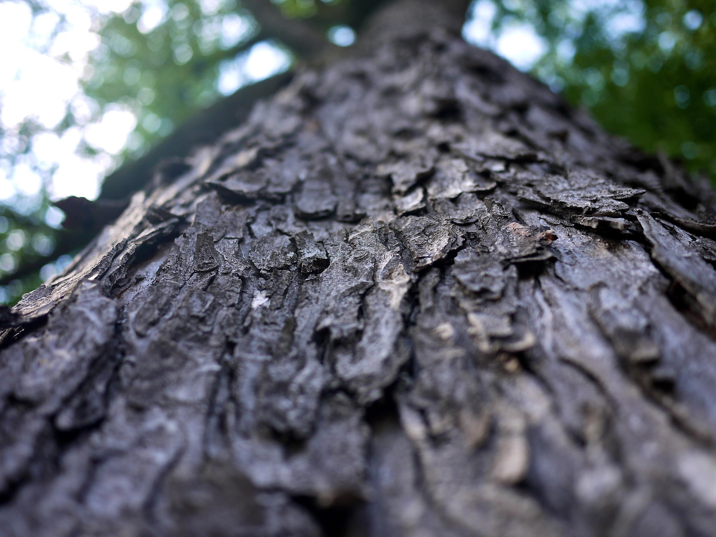Close up photo of tree bark.
