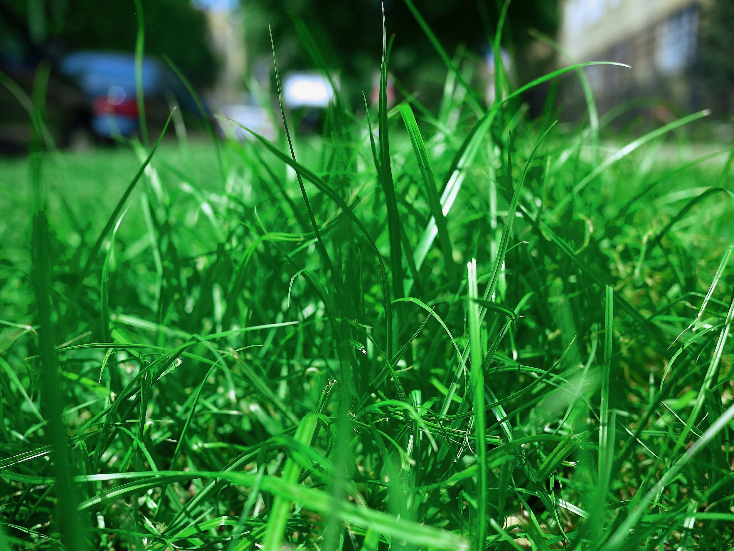 Close up blades of grass.