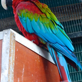 Parrot at the Jerusalem Biblical Zoo
