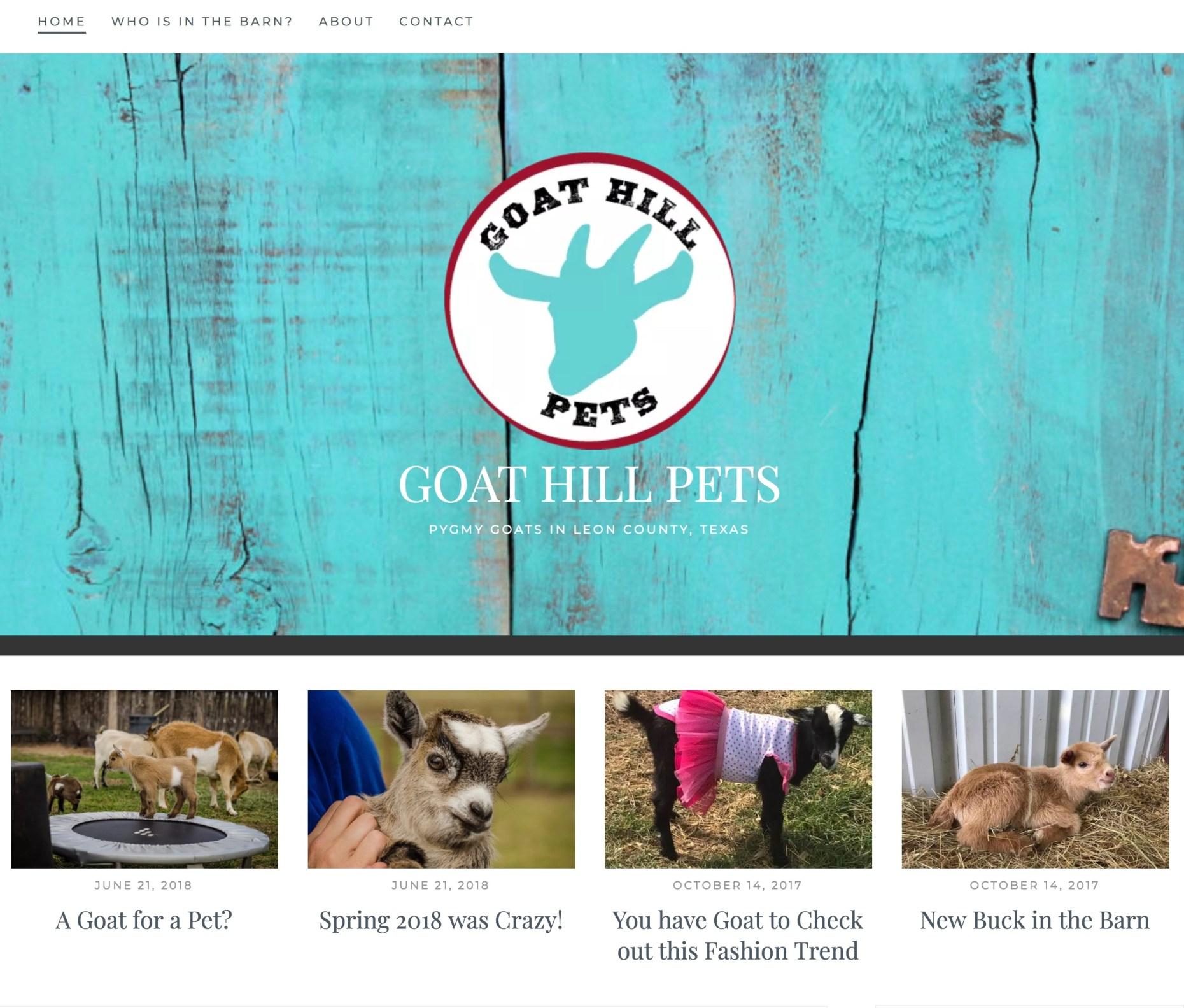 Pygmy goats in Jewett Texas