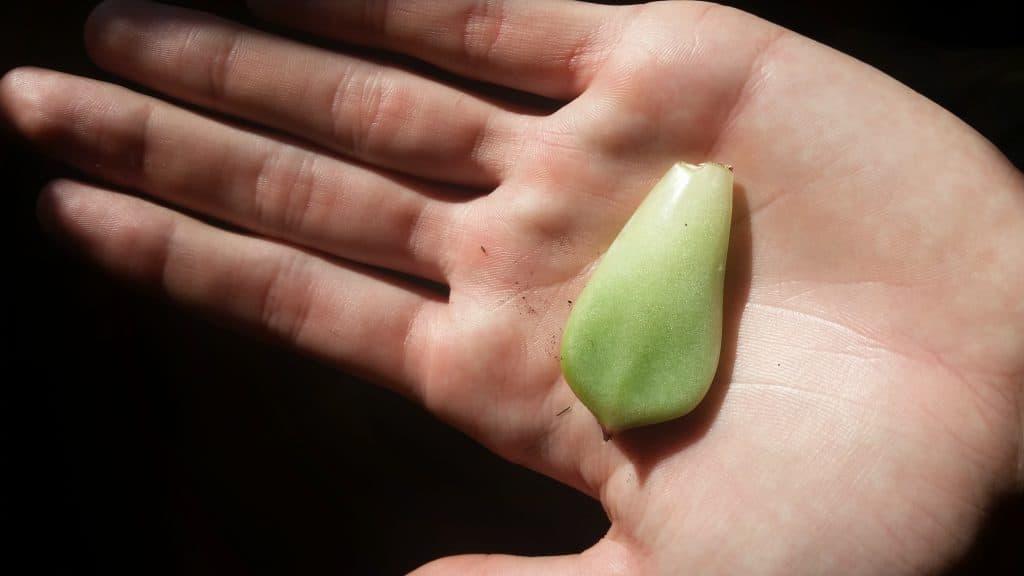 Yucca Propagation Methods | DoItYourself.com