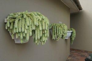 beginner succulents