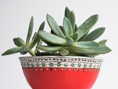 Simple Succulent Care