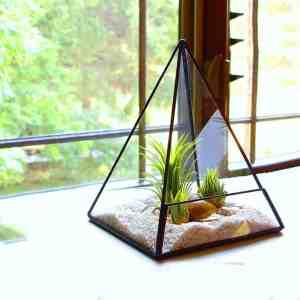 glass terrarium pyramid